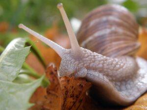 Cómo sacar el máximo partido a las granjas de caracoles