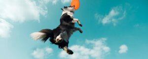 Andrea Servadio crea Fitdog Sports Club, un espacio de lujo para perros